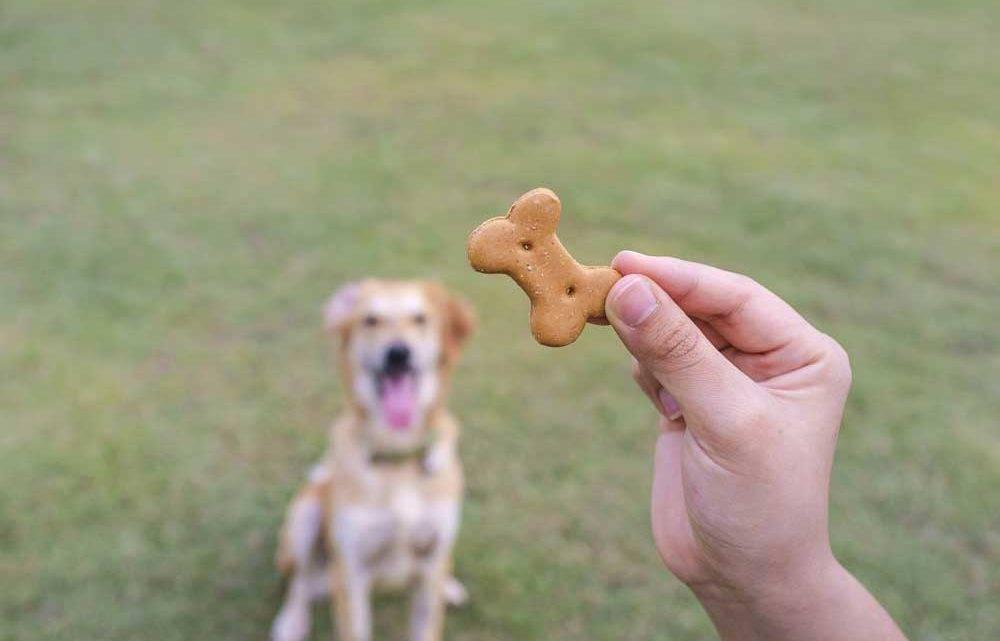 holding-treat-up-for-dog-training_thinkstockphotos-517214625-1000x641
