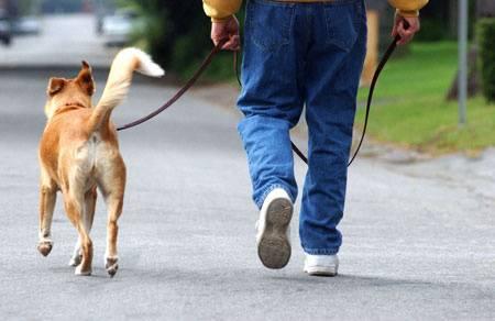 A02JAA Man walking dog
