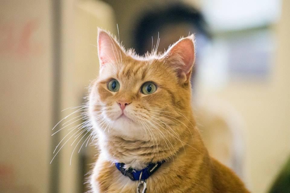 Ulični mačak zvani Bob