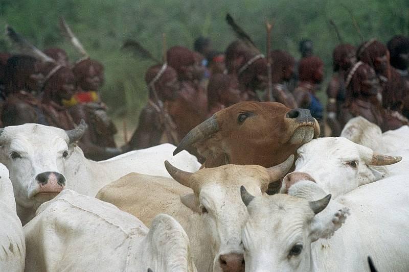 deo africke tradicije i kulture