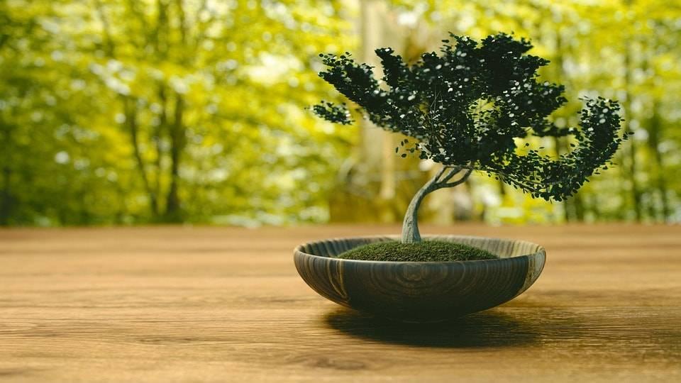 Bonsai tehnika: drvce kao umetnost