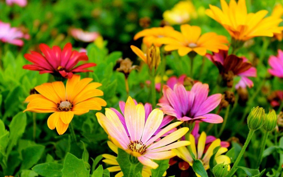 Simbolika cveća