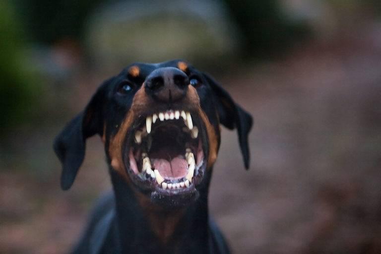 Da li psi mogu da namirišu strah?